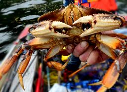 kitsumkalum-crab-lands-oceans-resources