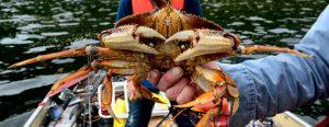 Kitsumkalum Crab Food Fishing