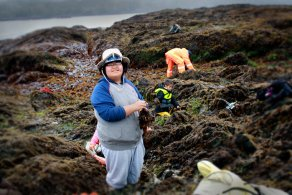 Kitsumkalum Seaweed harvesting