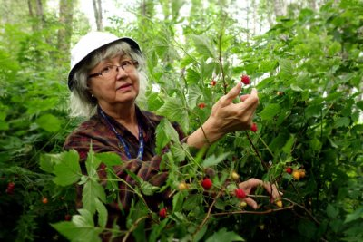 Kitsumkalum harvesting Salmon Berries