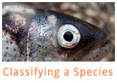 Classifying-a-species-project