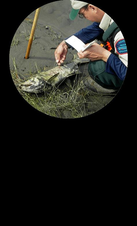 kitsumkalum-fisheries-research
