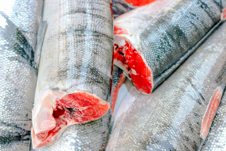 Kitsumkalum community food fishing
