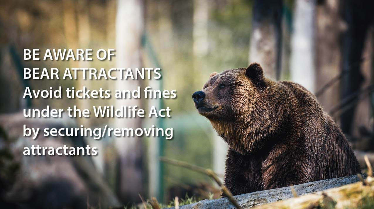 Notice About Bears from The Conservation Officer Service
